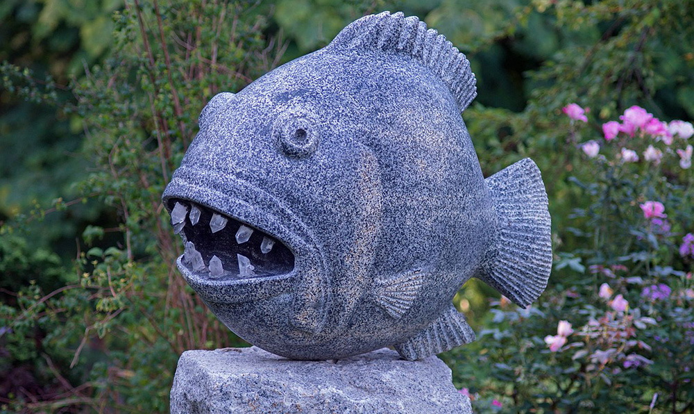 Toothed Fish